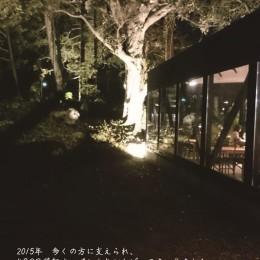 大きな木が見守るAallaZ
