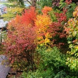 長岡の紅葉
