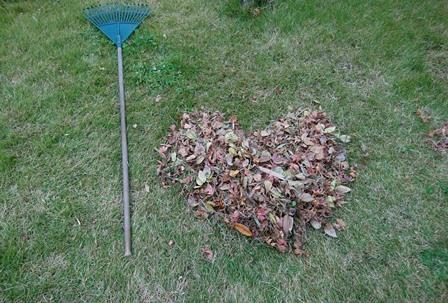 ハートフルな落ち葉
